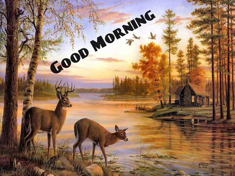 whatsapp-good-morning-english-25.jpg