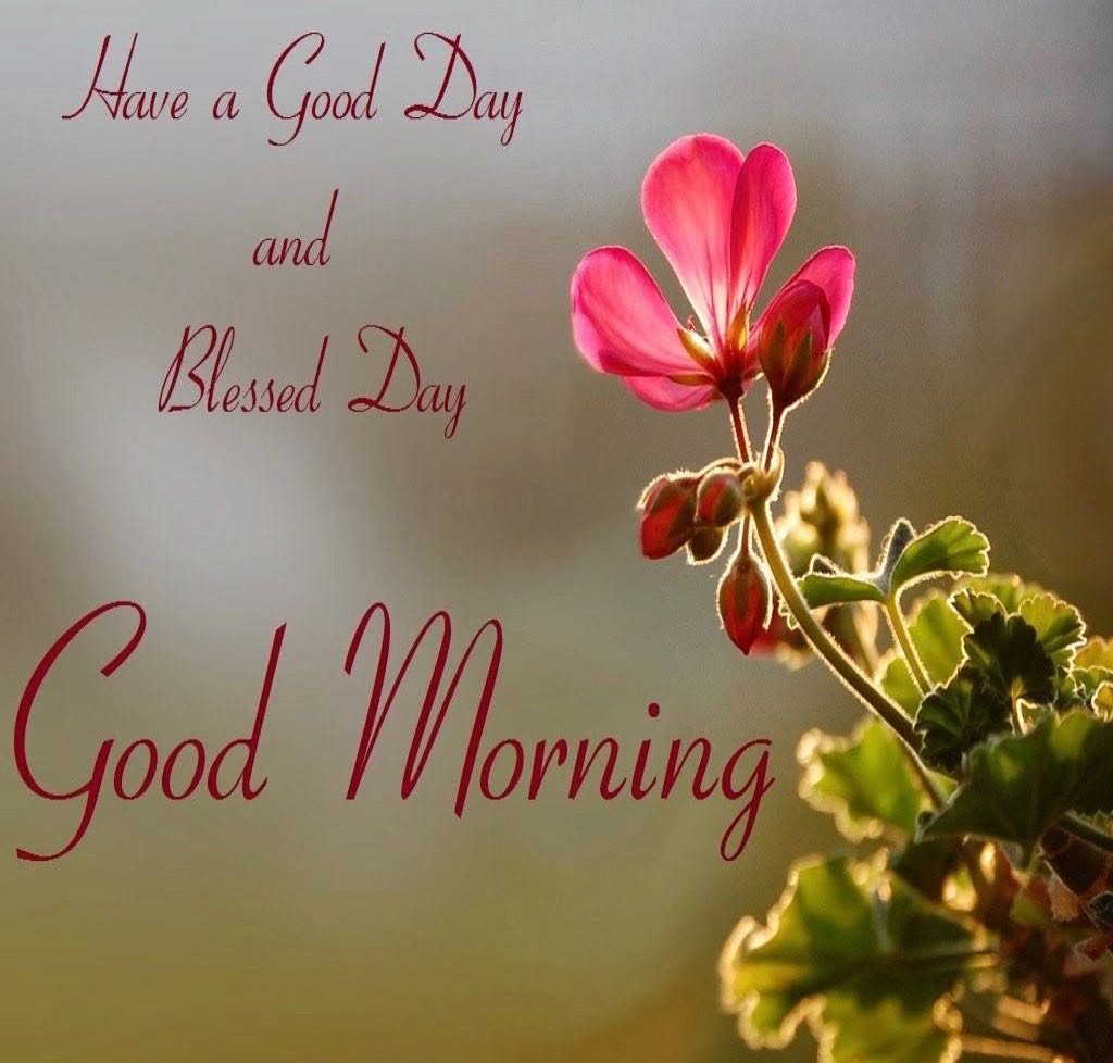 whatsapp-good-morning-english-26.jpg