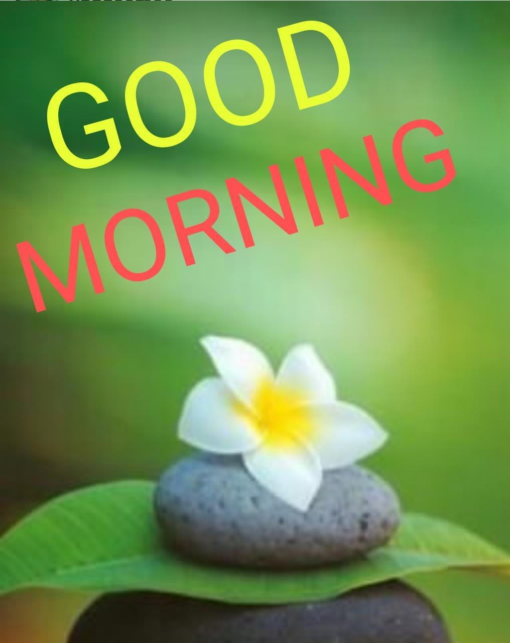 whatsapp-good-morning-english-36.jpg