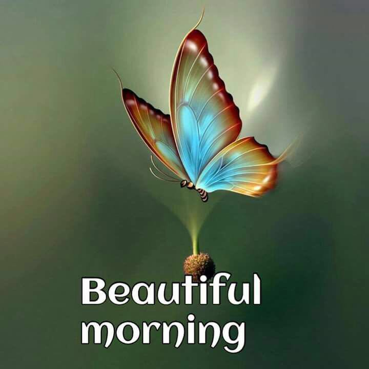 whatsapp-good-morning-image-in-english-11.jpg