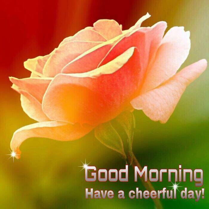 whatsapp-good-morning-image-in-english-14.jpg