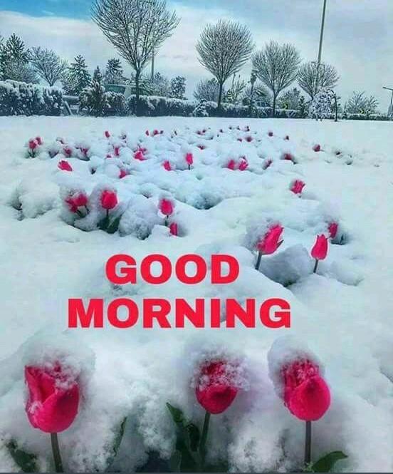whatsapp-good-morning-image-in-english-20.jpg