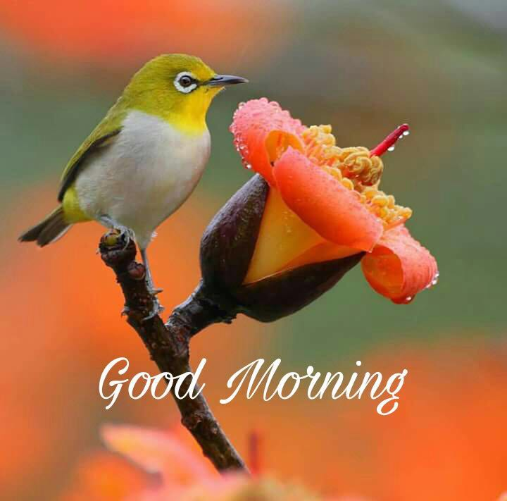 whatsapp-good-morning-image-in-english-26.jpg