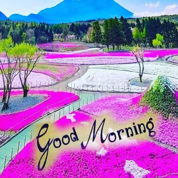 whatsapp-good-morning-image-in-english-27.jpg