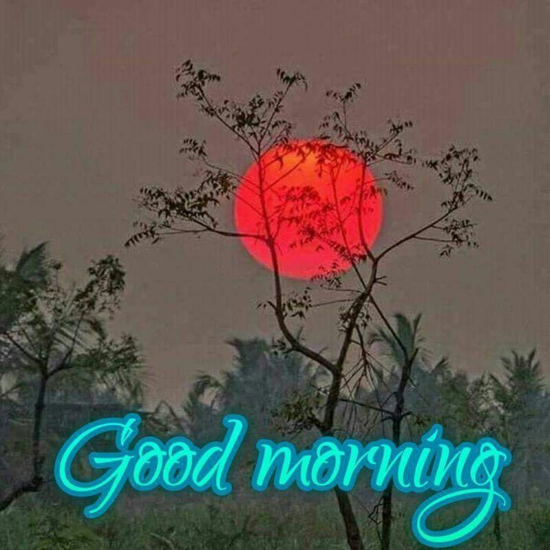 whatsapp-good-morning-image-in-english-5.jpg